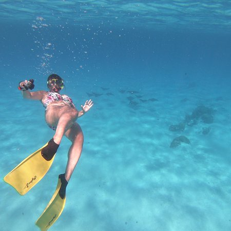 Pure Snorkeling by Reef Discovery: photo0.jpg
