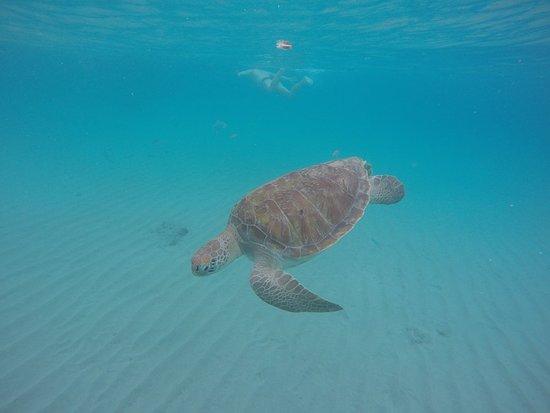 Kenepa Beach: GOPR2678_1527709732457_high_large.jpg