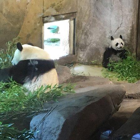 Zoo Aquarium de Madrid: photo0.jpg