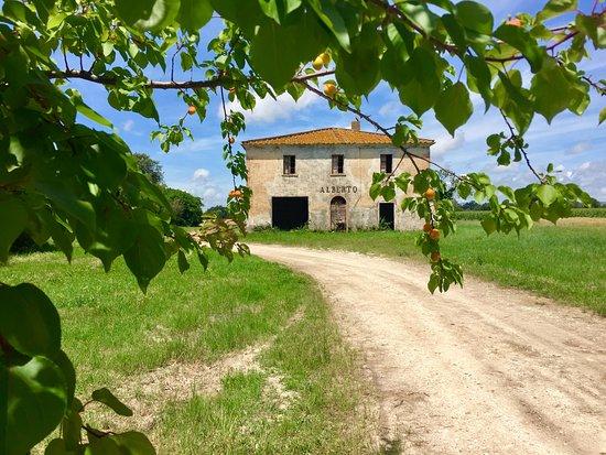 Viale dei Cipressi: Zypressenallee nach Bolgherie