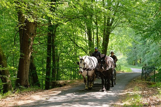Saint-Martin-du-Vieux-Belleme, Francie: Forêt de Bellême. Photo Christian VALLÉE