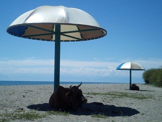 Grigoryevka, Kirgisistan: silent beaches at the Issyk-Kul Lake shore
