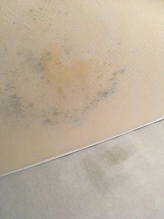 Pierre & Vacances Résidence Les Jardins de la Cote d'Opale : Urine soaked and mould stained mattress