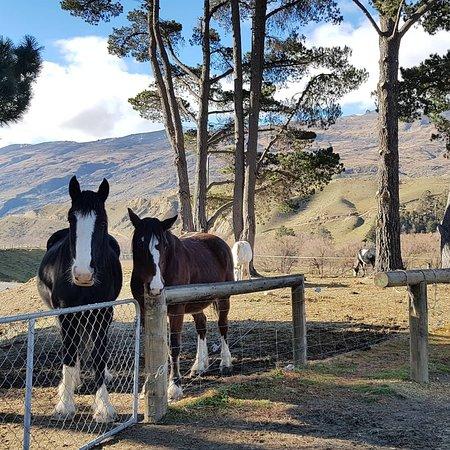 Back Country Saddles