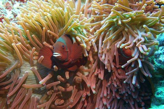 Bunaken Island, إندونيسيا: Deze zijn er ook!