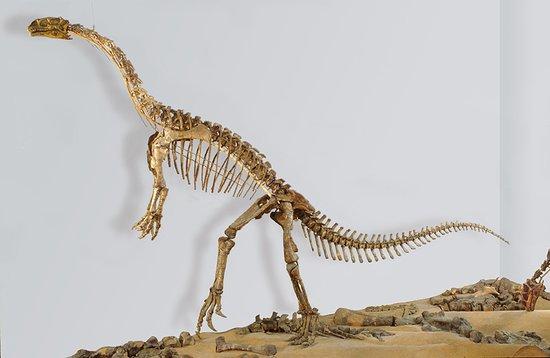 Tubinga, Alemania: Plateosaurus