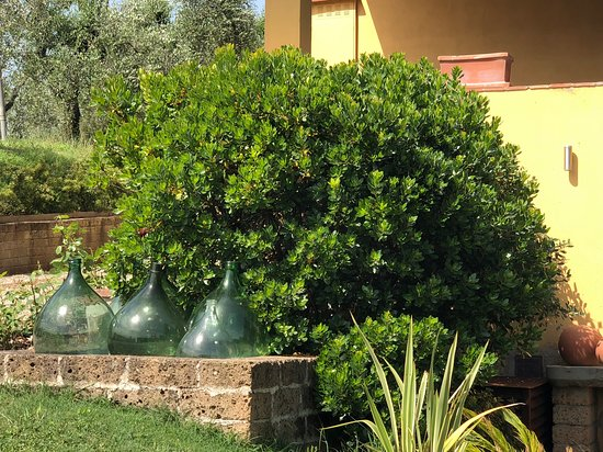 Malmantile, Italia: Decorative garden