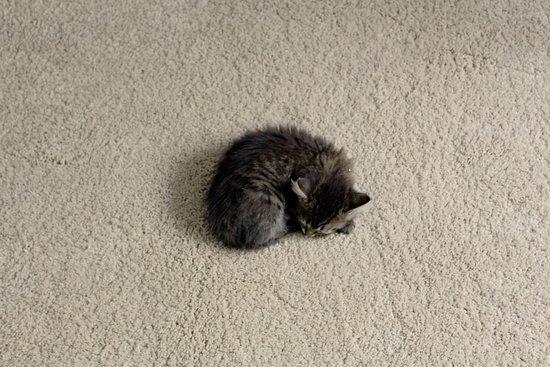 """Bolshe  Shersti!: """"Больше Шерсти!"""": когда ты одинокий маленький кот.. Помни: где-то тебя точно очень-очень ждут."""