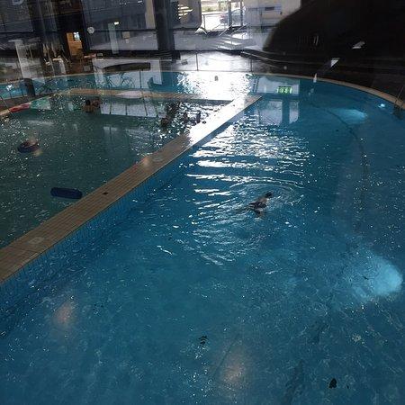Per amanti del nuoto