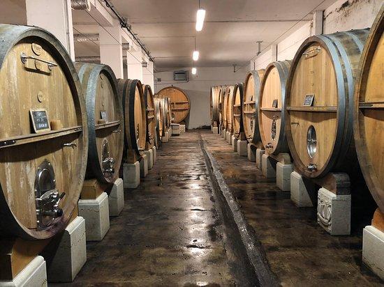 Castellet, Frankreich: The red wine fermentation cellar