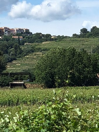 Castellet, Frankreich: View of the Tourtine Vineyard where it opens to the left