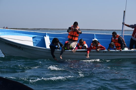 Adolfo Lopez Mateos, Mexiko: Whale Watching in Magdalena Bay Season is January through April. Book your stay at Whales Tale I