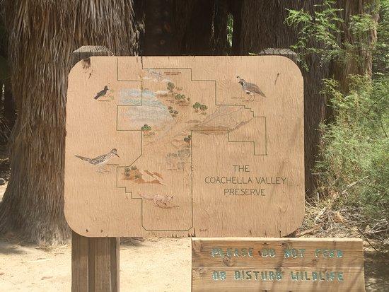Bilde fra Coachella Valley