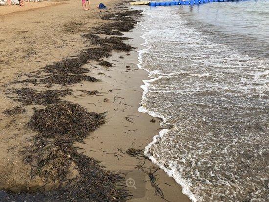 Kirman Sidemarin Beach & Spa: Это ежедневный вид пляжа отеля