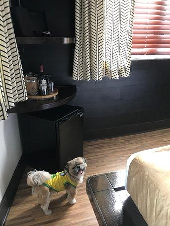 Pet Friendly Hotel Picture Of Chelsea Hotel Miami Beach Tripadvisor