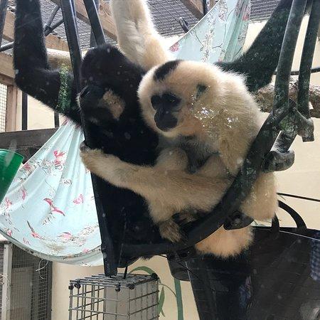 Monkey World 사진