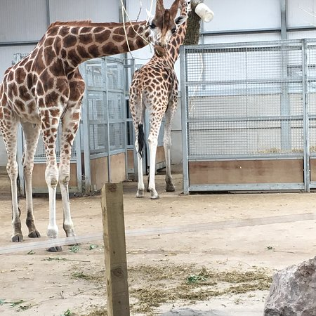 Twycross Zoo: photo1.jpg