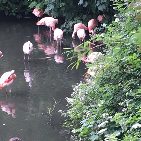 Twycross Zoo: photo2.jpg