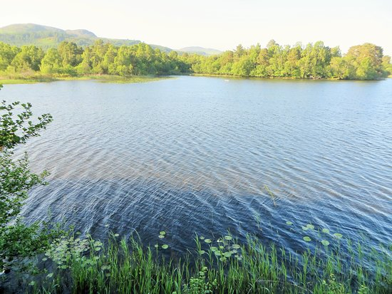 Loch of the Lowes Visitor Centre and Wildlife Reserve: Loch from the hide