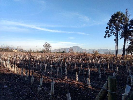 Talagante, Chile: IMG_20180618_101316939_HDR_large.jpg