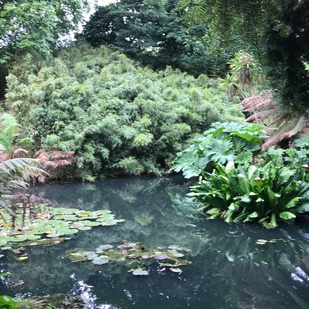 The Lost Gardens of Heligan: photo2.jpg