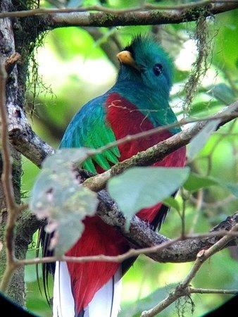 Guia Naturalista Olman Gonzalez: IMG_20180613_074311598_LL_large.jpg