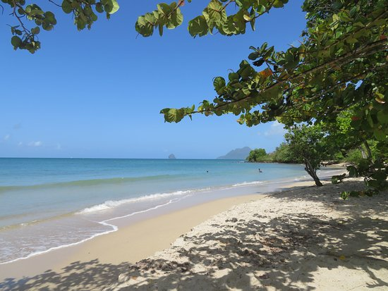 Sainte-Luce, Martinique: Ombragée