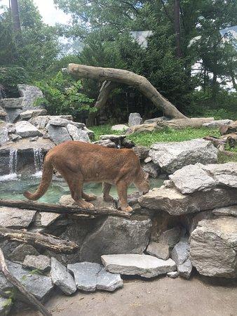 Cincinnati Zoo Botanical Garden Aktuelle 2018 Lohnt Es Sich