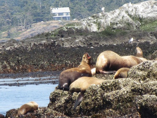 Puget Sound Express - Day Trips: Sea Lions-- they were splashing a lot in the water, too.