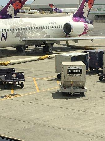 Фотография Hawaiian Airlines