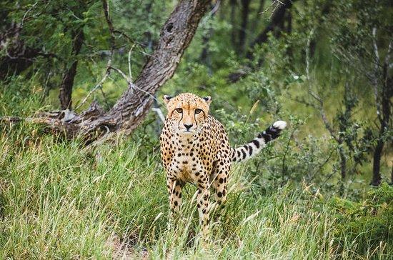 Pilanesberg nature Reserve and Sun...