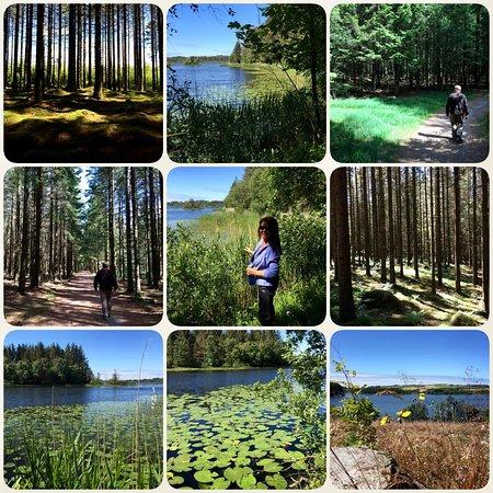 Time Municipality, Norwegia: Njåskogen i Time kommune er ett vakkert turområde med mange variasjoner. Løyper på 3 og 4,5 km,