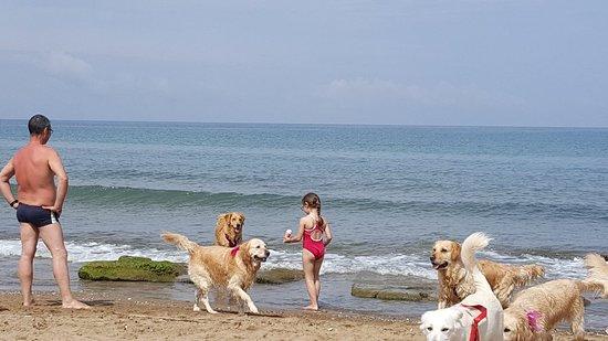 Dog Beach: 20180606_104258_large.jpg