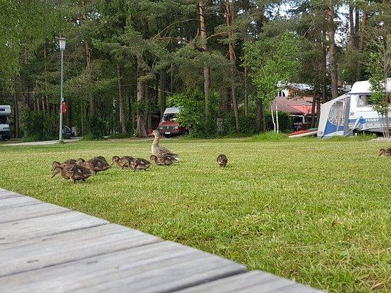 Finkenstein am Faaker See, Austria: 20180606_184626_large.jpg