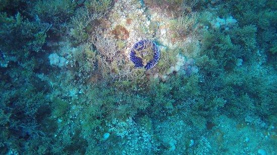 Asinara Scuba Diving: Riccio