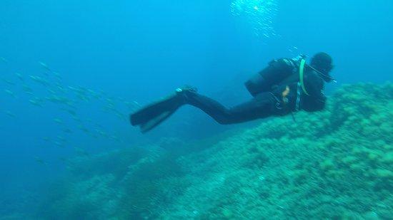 Asinara Scuba Diving: Alessandro... Forse :-D