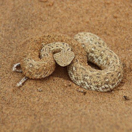 Swakopmund, Namibia: photo1.jpg