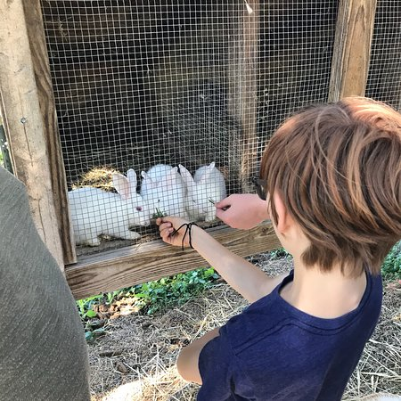 Durham, NY: Hull-O Farms, Family Farm Vacations