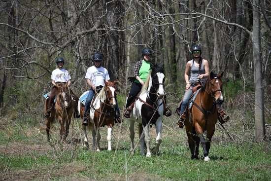 Hudson, État de New York : Beutuful horses and gorgeous trails.