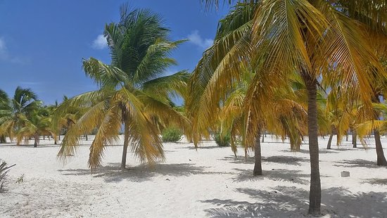 Sirena Beach: The only one with palm trees providing lots of natural shade.