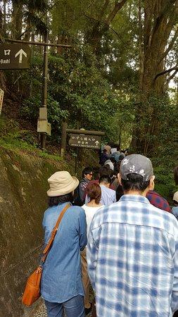 Iya Kazura Bridge صورة فوتوغرافية