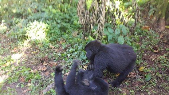 Masindi, Uganda: 20180603_085253_large.jpg