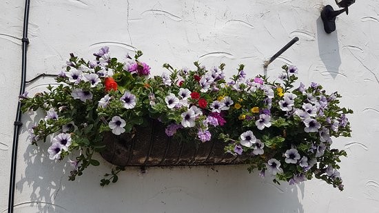 Challacombe, UK: Hanging baskets at the Black Venus Inn