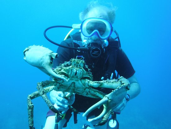 Bahama Divers: Thats one big Crab