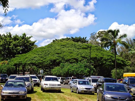 Liliuokalani Gardens: Parking in the area.