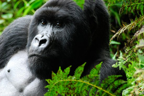 Show Me Around Rwanda Safaris