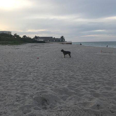 Jupiter Dog Beach: photo0.jpg