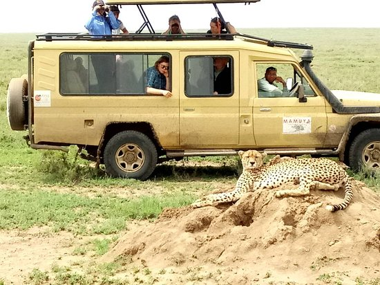 Mamuya Safaris