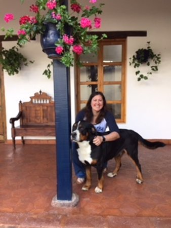 Imbabura Province, Ecuador: Mambo a hotel resident Swiss mountain dog who is extremely friendly!