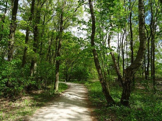 Voetstappenpad;een 25km lange wandeling rond Hilversum